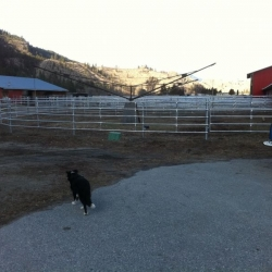 continuous-horse-fence-2